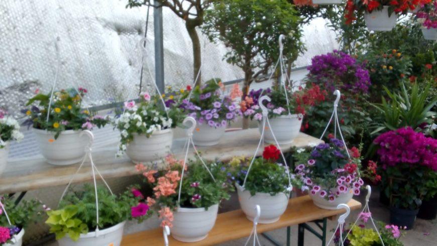Beet- und Balkonpflanzen