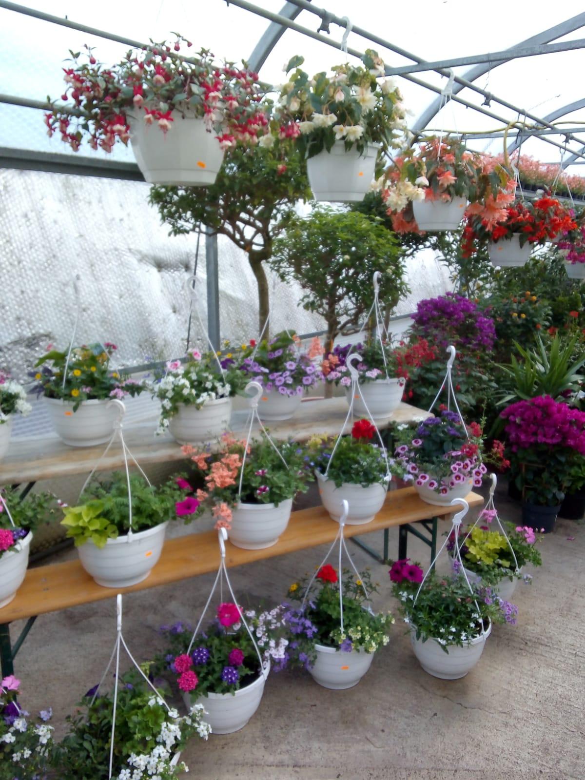 Beet und balkonpflanzen bio grauer naturkostladen for Beet und balkonpflanzen